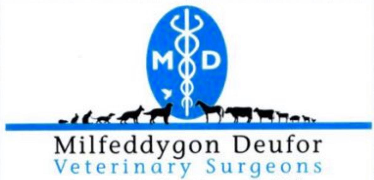 Our Bengal Cats and Kittens are Fully Vet Checked by Milfeddygon Deufor Veterinary Surgeons
