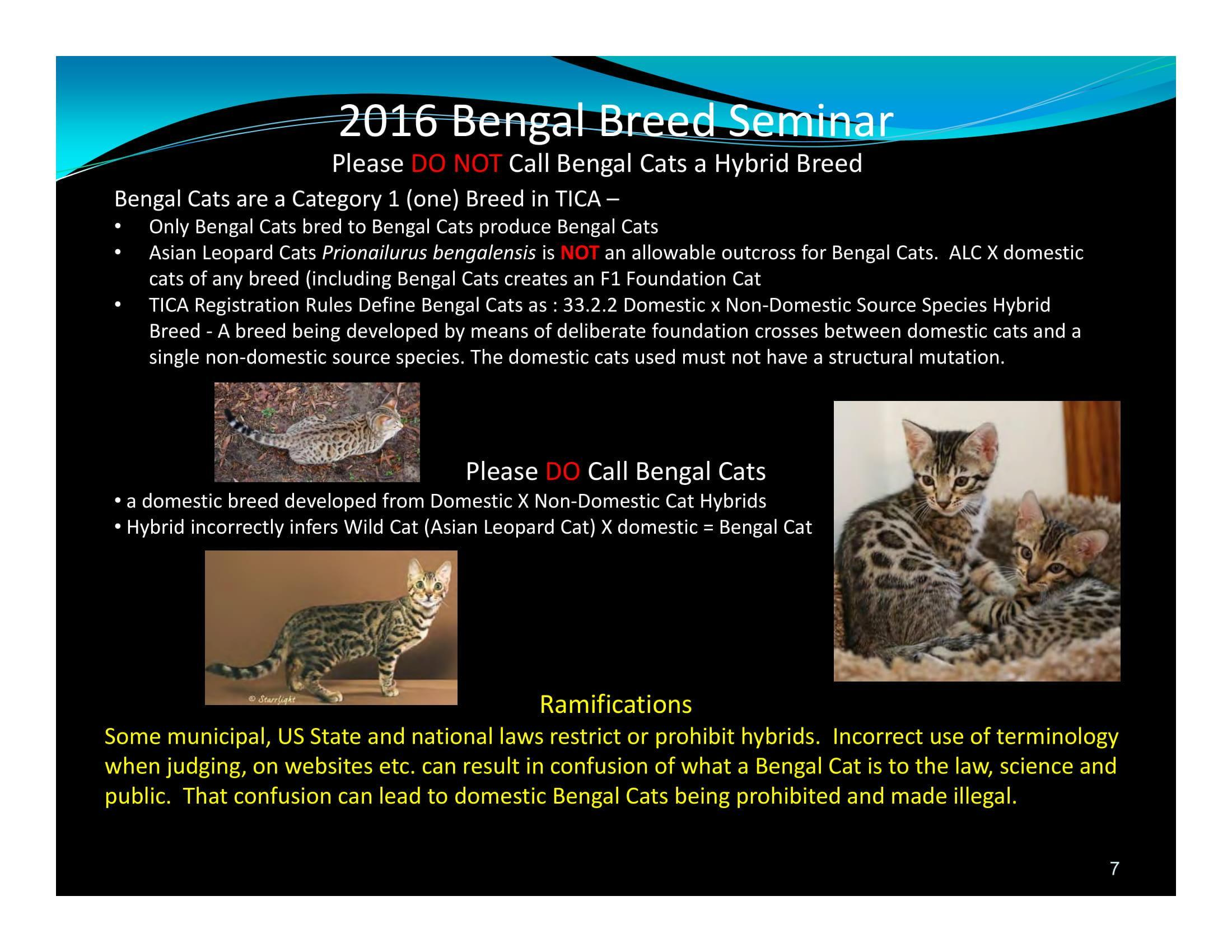 Bengal Cat,Bengal Cat Breed,Bengal Cat Information,Bengal Cat History,About the Bengal Cat,What is a Bengal Cat,Bengal Cat Breeding,The Bengal Breed Standards,Asian Leopard Cat,Leopard Cat,Bengal Cat Breed Seminar,TICA